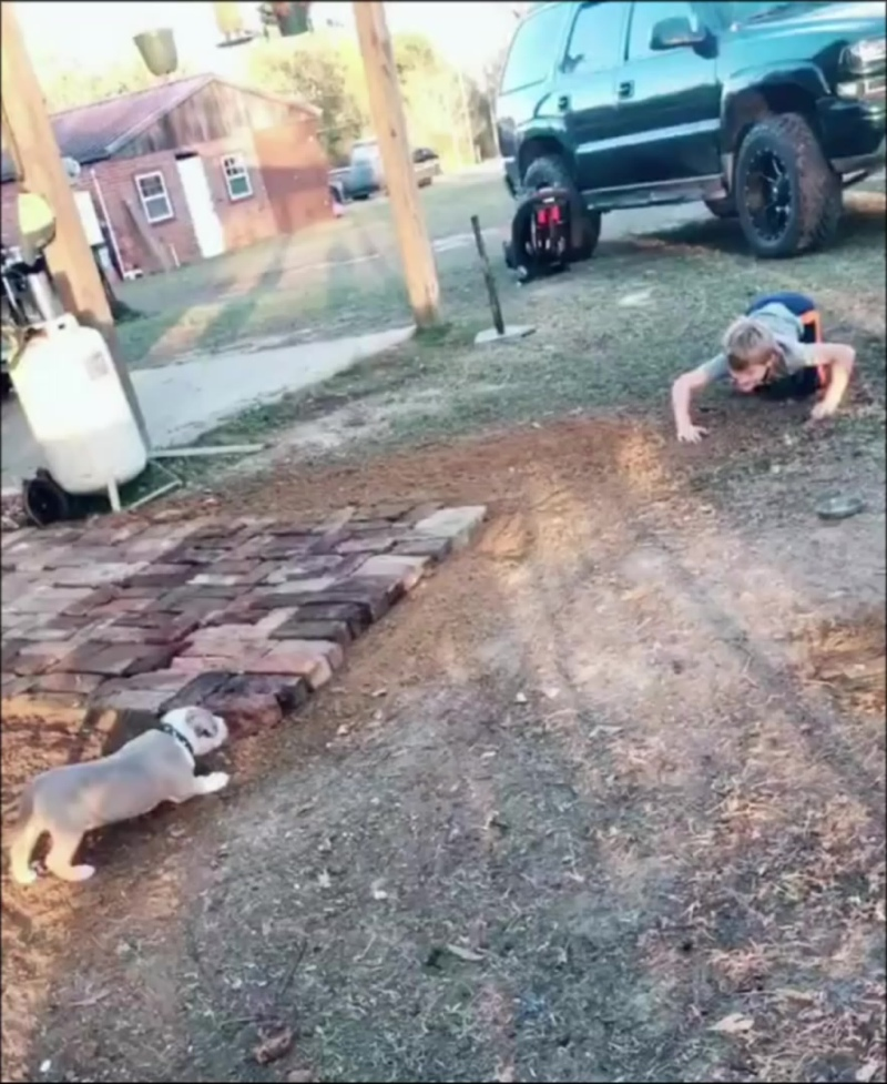 собака убийца напала на ребенка😁
