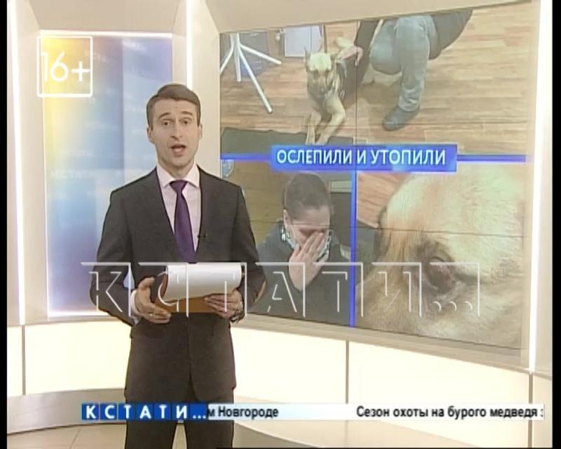 Нижегородские моряки спасли собаку, пострадавшую от живодеров в Санкт-Петербурге