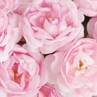 ● | FLORIS | ❀ Доставка цветов в Улан-Удэ ● 03