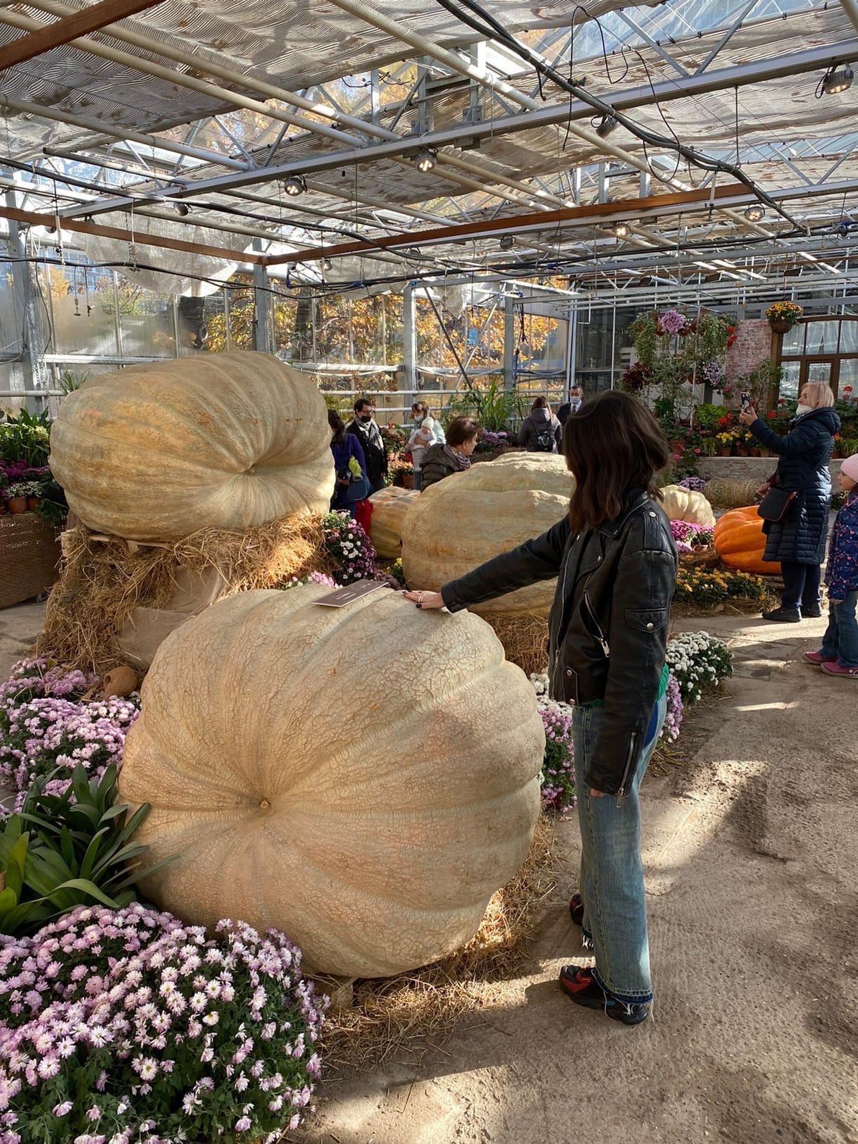 Выставка огромных тыкв в «Аптекарском огороде»