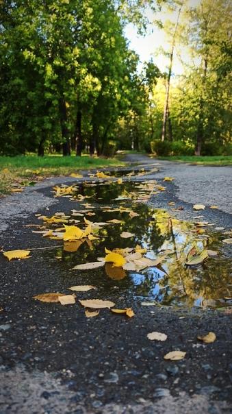 Осень подкралась 🍂Фото: [id214349446 Елена Красулина]....