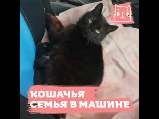 Кошка Пешка и приятный пушистый сюрприз в машине