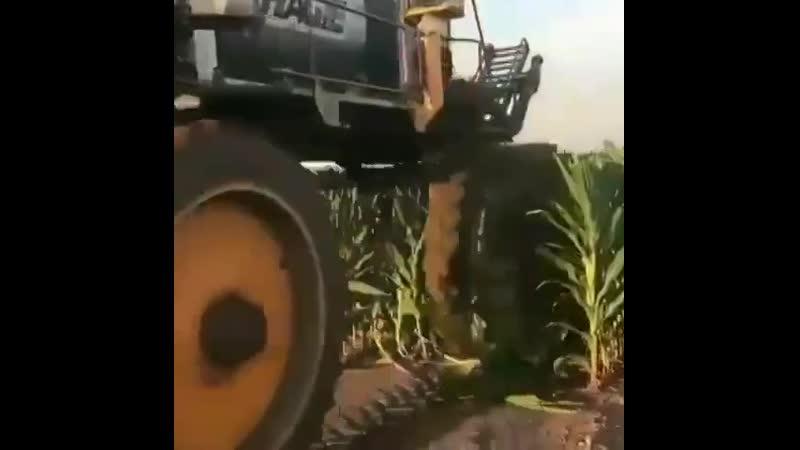 Трактор переросток