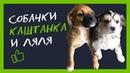 Собаки-дворняжки Ляля и Каштанка на передержке у волонтёров