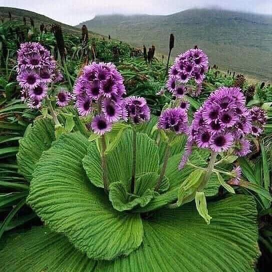 Очень красивый цветок  кто знает название