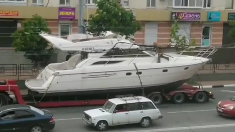 Внезапный гость на улицах Новороссийска