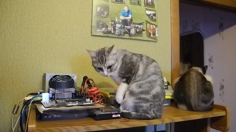 Коты компьютерщики