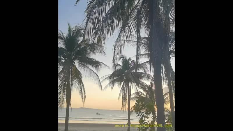 Palms on the beach in Sanya, Hainan Island, China - Пальмовая роща на пляже в Санья, на острове Хайнань, Китай