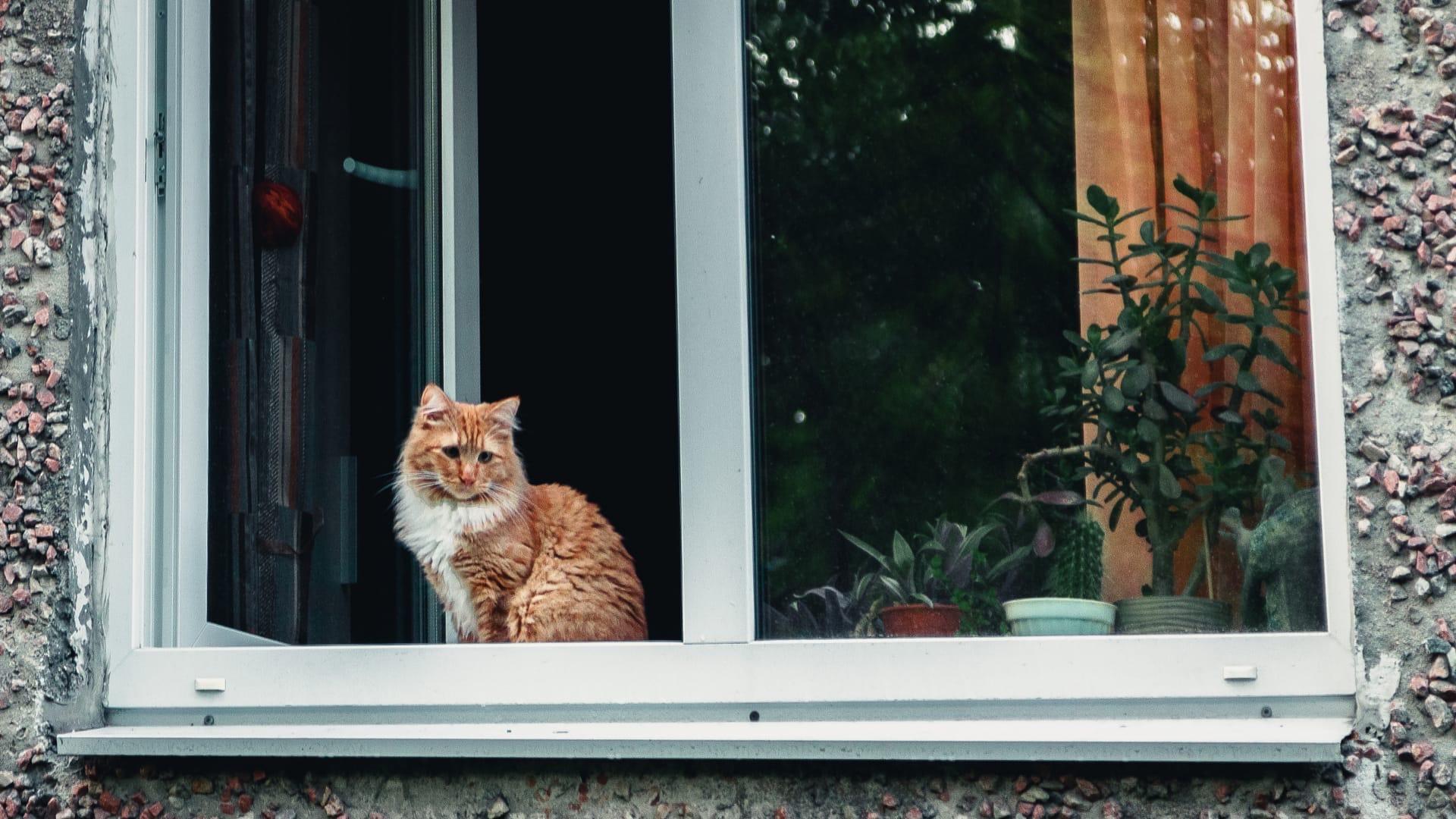Просто представитель семейства кошачьих на подоконнике в Апатитах #котикиебеней  - Фото