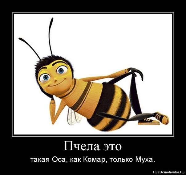 Анекдоты Про Пчел