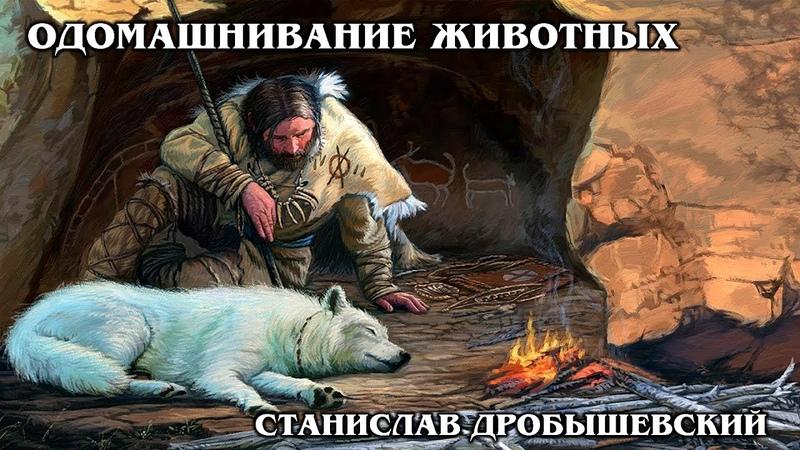 ОДОМАШНИВАНИЕ ЖИВОТНЫХ (Лекция) Как происходило приручение животных людьми | Станислав Дробышевский