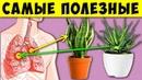 Многие держат дома Эти растения и не догадываются какую пользу они могут принести! 13 самых полезных
