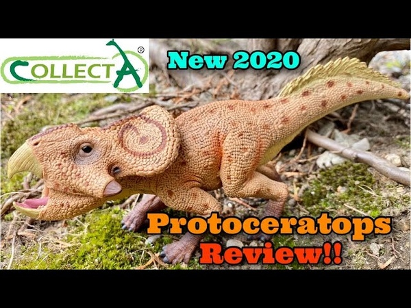 CollectA 2020 Deluxe Protoceratops Review 1 6 Scale