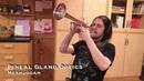 Meshuggah's Pineal Gland Optics on Trumpet