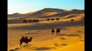 Дикий мир. Самая загадочная пустыня - Гоби.