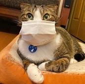 Человек – COVID-19 – домашнее животное. Кто есть кот в этой цепочке